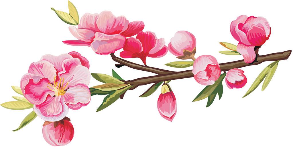 Веточки цветов картинки 5
