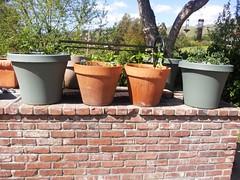 Reveling In My April Easter Garden 3
