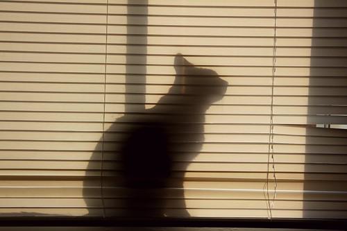 276.365 :: silhouette