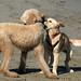 You Gossip by Dogogle