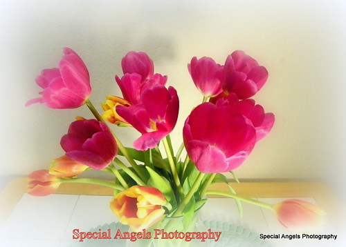 Have a Good Thursday Everyone by Special Angels Photography( eye problems)