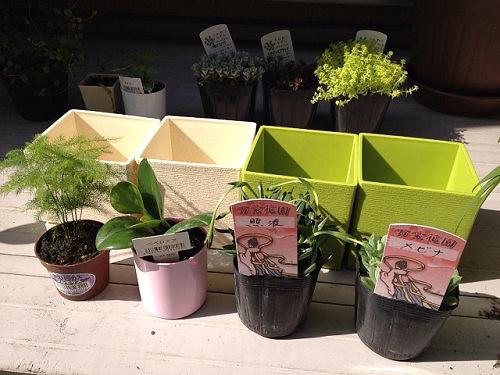 観葉植物の植え替え-04