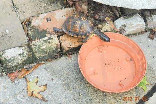 Turtle Oasis