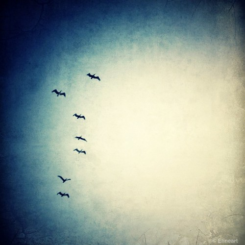 3:365 Feathered by elineart