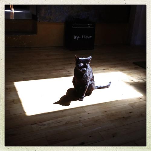 BLACK CAT WHITE SQUARE