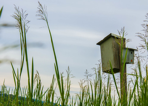 Birdhouse in the Grass
