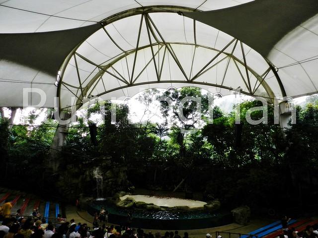 Singapore Zoo 05