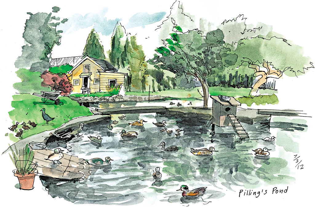 Neighbors Dig In For Old Duck Pond Seattle Sketcher