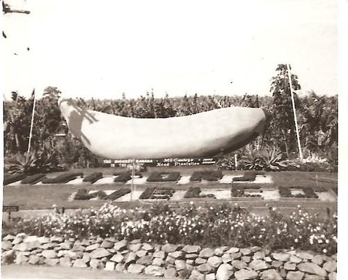 Big bannana in 1966