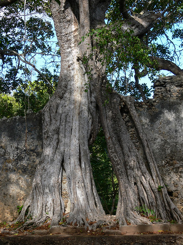 camera trees plants kenya gedi malindi gede kilifi panasonicdmcfz30 featureslandmarks