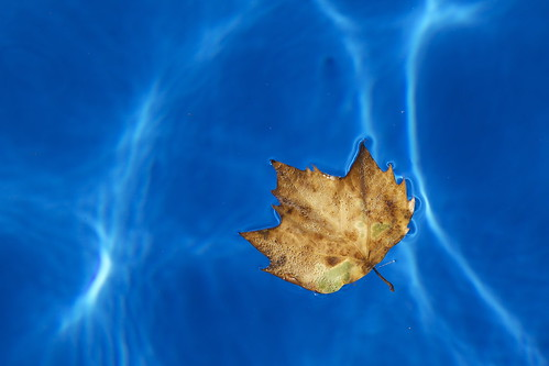 Leaf in Water, Provence.