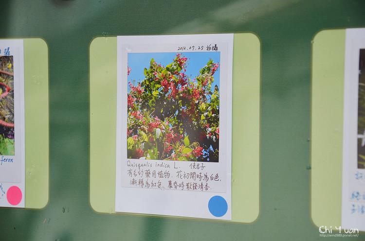 植物園使君子06.jpg