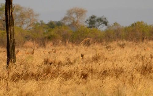 tanzania mikumi mikuminationalpark