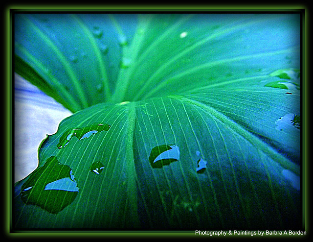 Simplicity of Nature   Flickr - Photo Sharing!