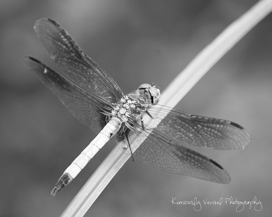 insects-B&W