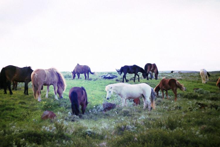wild horses closer