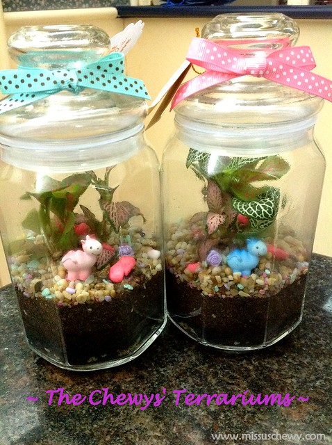 The Chewys' Terrariums