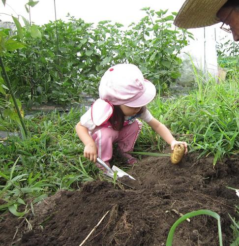 ジャガイモを掘る孫娘 2012年8月13日 by Poran111