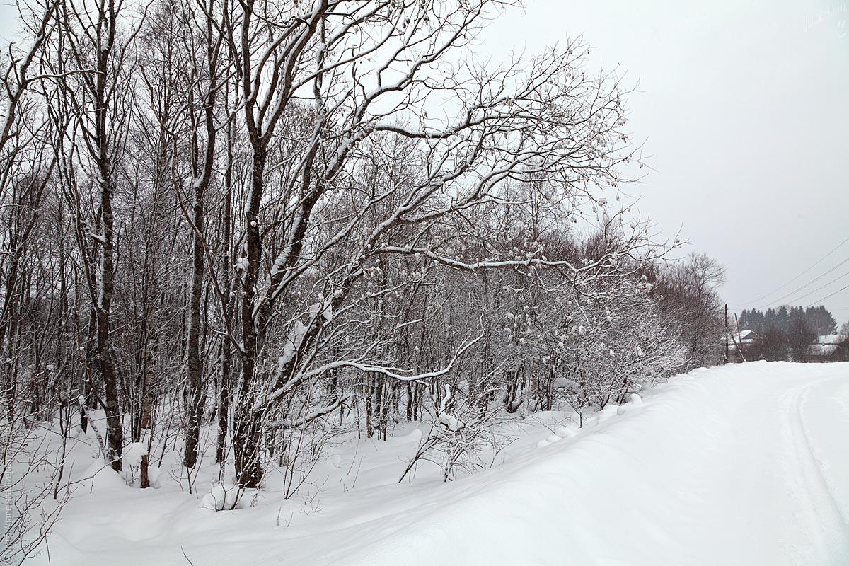 Деревня Морщихинская. Дорога от визитцентра