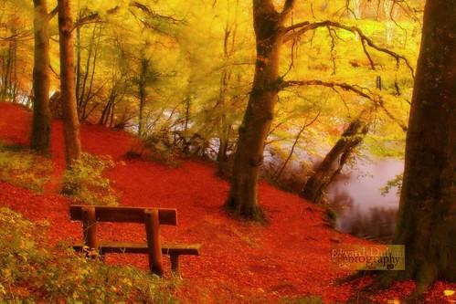autumn trees ireland fall nature leaves bench landscape seat herbst eire otoño emeraldisle leinster autunna worldwidelandscapes natureselegantshots panoramafotográfico edwarddullardphotographykilkennycityireland me2youphotographylevel1