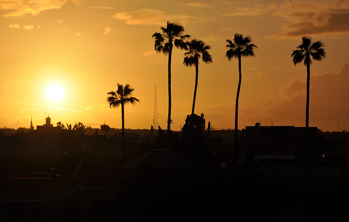 africa city travel light sunset urban sun silhouette palms nikon afternoon view palm exotic morocco maroc marrakech afrika marrakesh marokko riad marrakesch d90