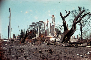 After the Bushfire, Leura 1957