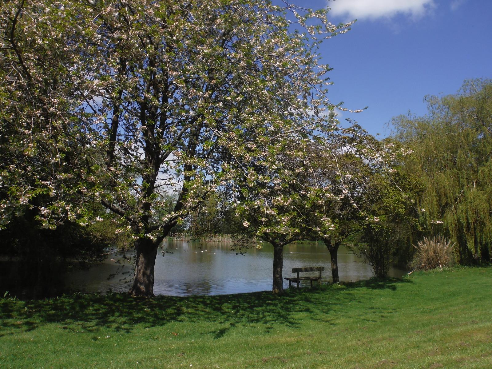 Artificial Lake, near Tiddington SWC Walk 190 - Thame Circular (Extension)