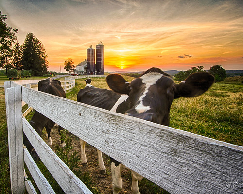 trees sunset newyork field grass skyline clouds fence cow farm silo historical orangecounty dairy warwick landcape bellvale