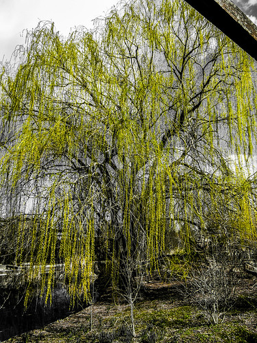 Tree in Yellow