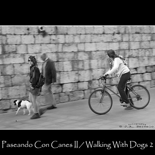 Paseando con Canes II / Walking with Dogs 2