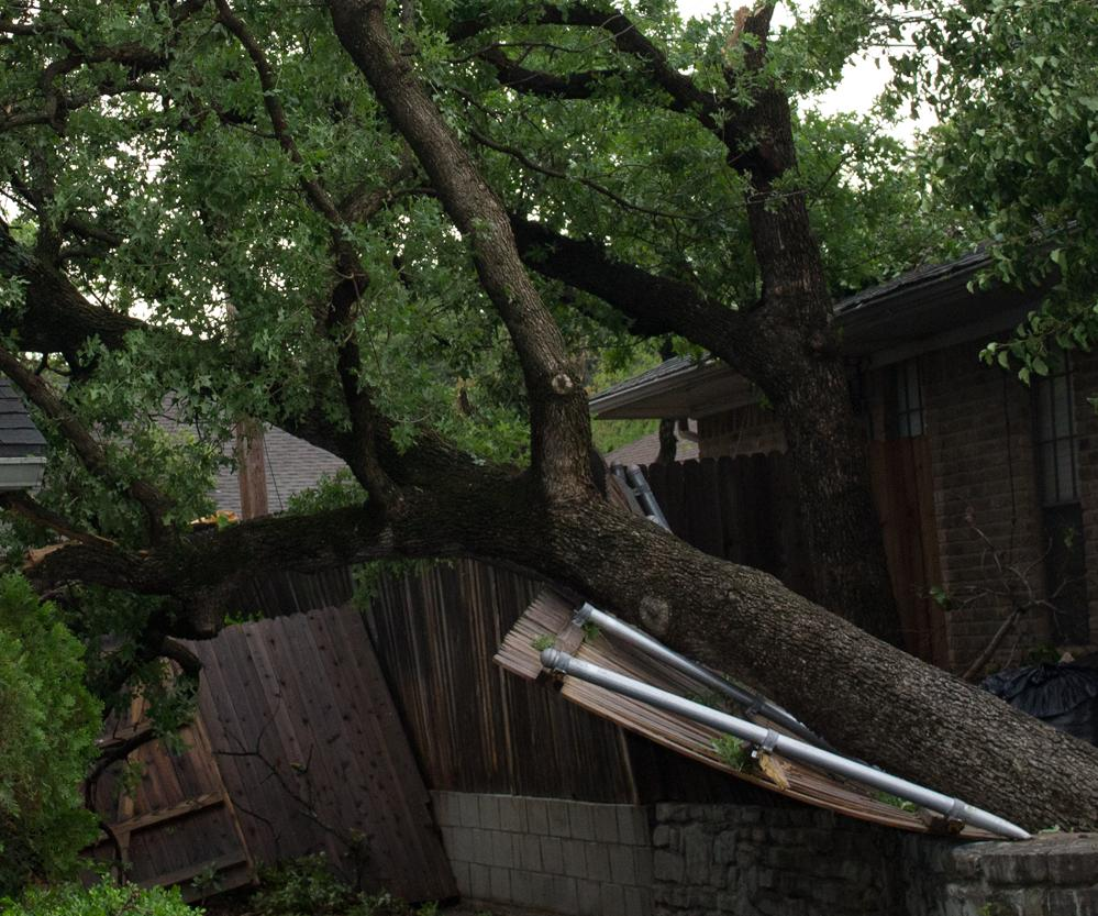 Bardin Tree Fence