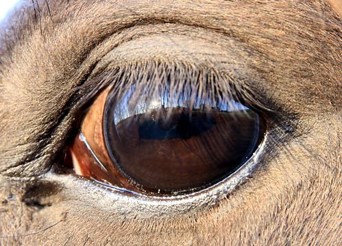 cierra_eyecloseup