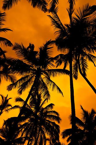 travel sky orange clouds asia palm srilanka