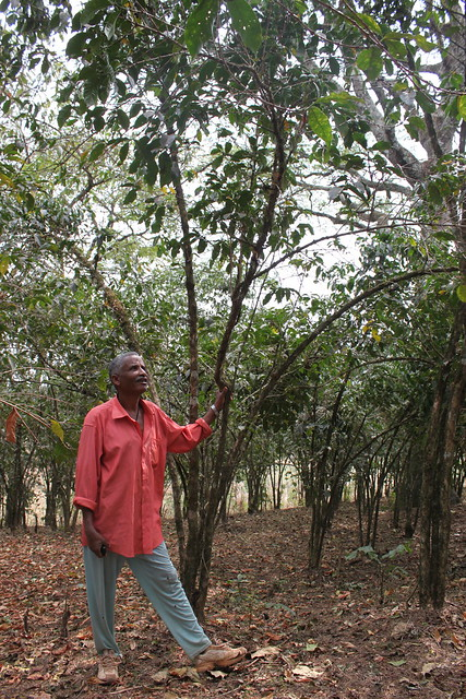 Kebge Wubeshet Coffeefarmer from Hana Boske Cooperative