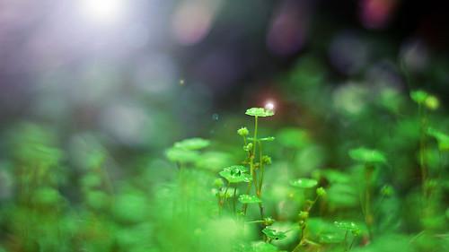 無料写真素材, 花・植物, 雫・水滴
