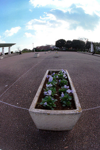 Flower bed in plaza.