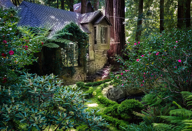 Enchanted Place In The Redwoods Flickr Photo Sharing