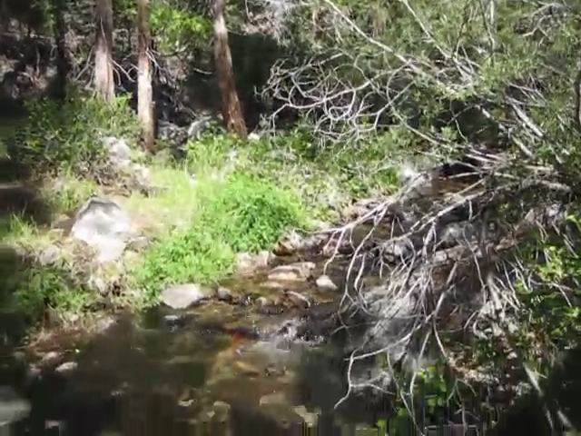 261 Video of Tahquitz Creek flowing through Carumba Camp