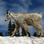 20120702 montana - going to sun - 31