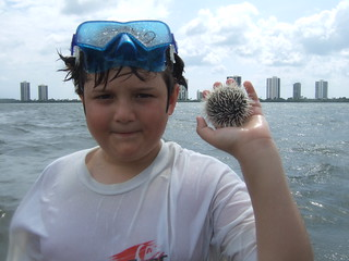 Joshua finds a west indian sea egg.