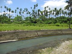 2012年5月工程未開始前,檳榔園旁的河道仍保有一部分野溪。