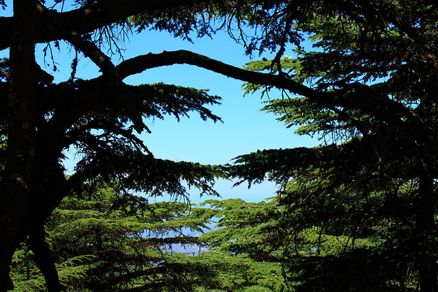 Under the Shadow of the Cedars of Lebanon