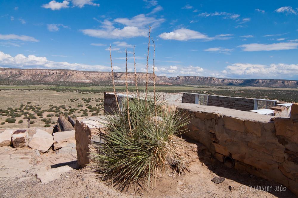 Acoma Pueblo and yucca plant