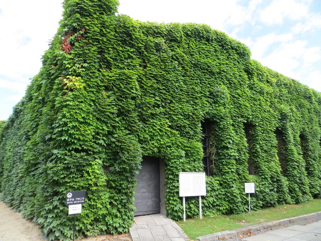 常春藤覆盖日本库拉什基的结构。照片由joel国外。