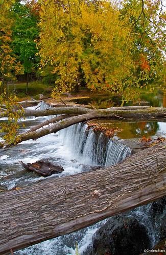 Fallen tree ©ChelseaStark http://www.chelseastarkphotography.com by chelseastarkphotography.com