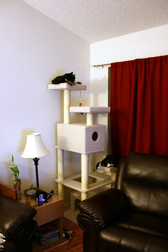 The new cat tower