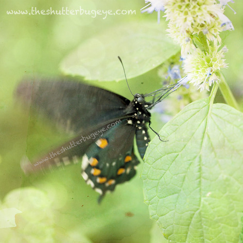 Butterfly 6 by The Shutterbug Eye™