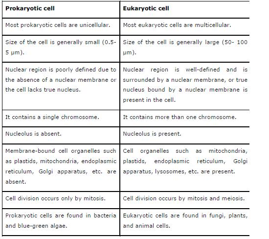 NCERT Solutions for Class 9th Science Chapter 5 The Fundamental – Prokaryotic and Eukaryotic Cells Worksheet