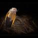 Samar Cobra by guenterleitenbauer