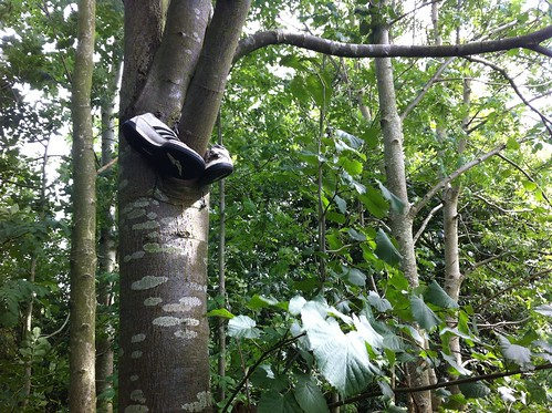 Shoes In A Tree